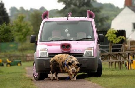 Pig themed vehicle