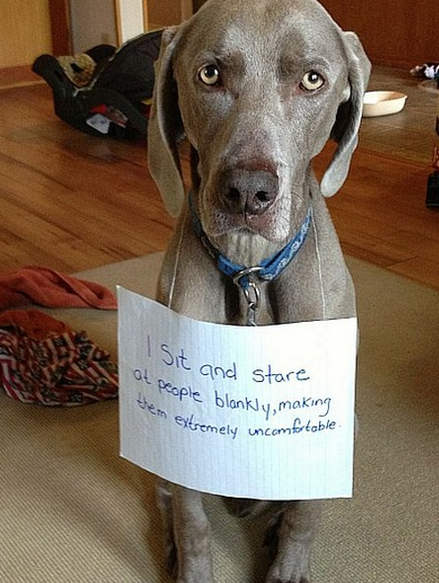 Top 10 Best Examples of Dog Shaming