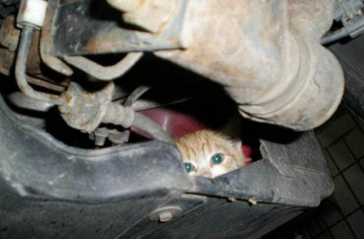 Top 10 Animals Found in Car Engines