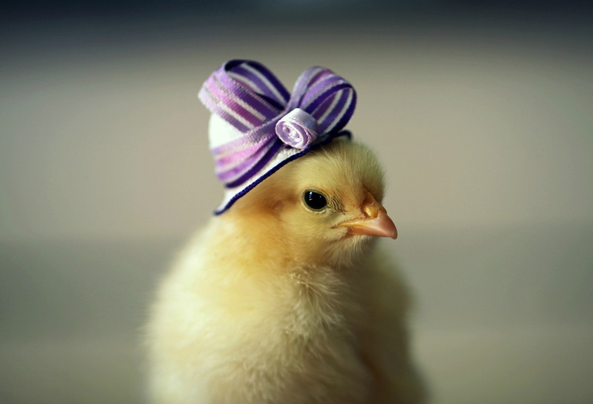 Ten of the Cutest Chicks in Hats You Will Ever See in Your ...