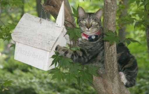 Top 10 Cats In Bird Houses