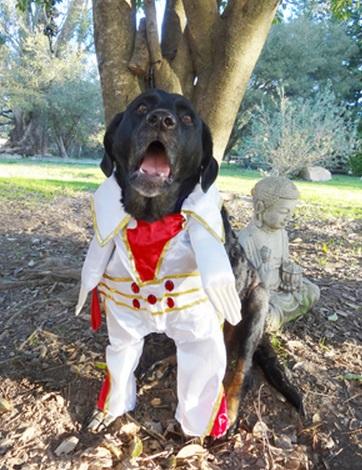 Top 10 Elvis Presley Dogs