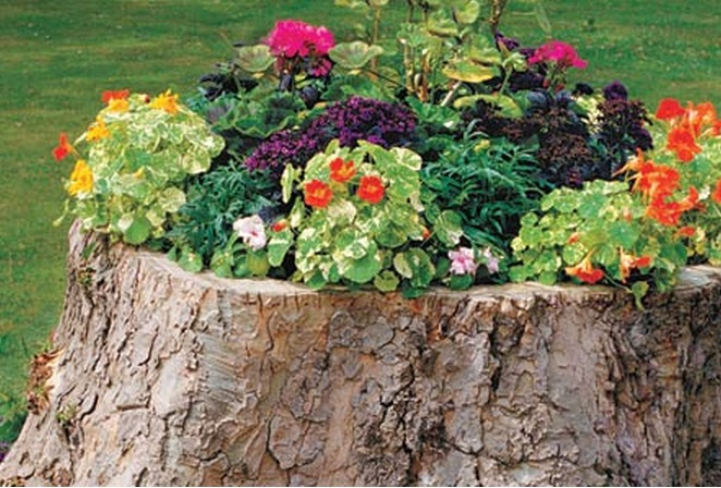 Top 10 amazing things to do with tree stumps for Tree trunk uses