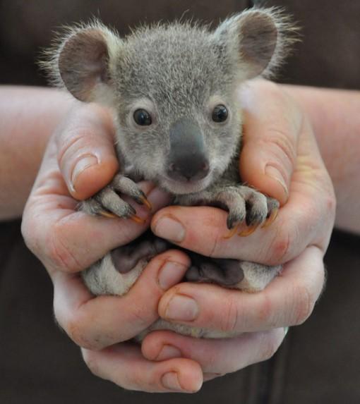 Top 10 Super Cute Newborn Animals