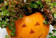 Top 10 Best Designs for Pumpkin Planters