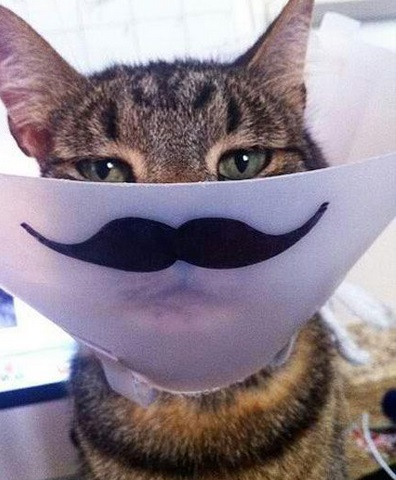 Top 10 Funny Cats with Moustaches