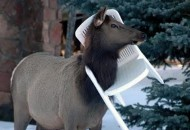 Top 10 Animals Stuck in Plastic Garden Chairs