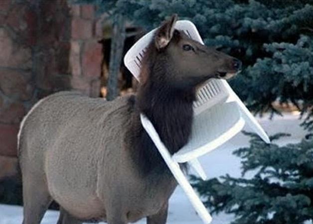 Top 10 Animals Stuck In Plastic Garden Chairs