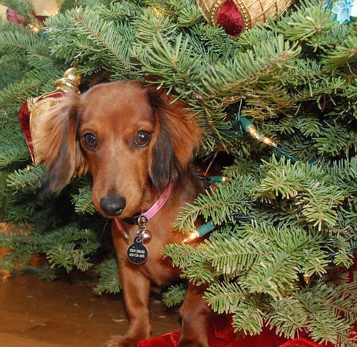When Do U Take Down A Christmas Tree: Top 10 Animals Who Think Its Time To Take Down The