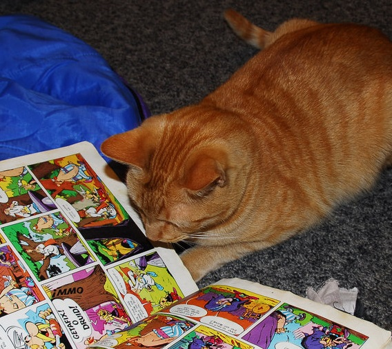 Reading Cats And Dogs Home