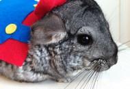 Top 10 Animals Dressed as Super Mario