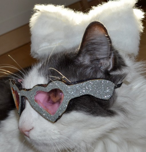Top 10 Cats Wearing Heart Shaped Glasses