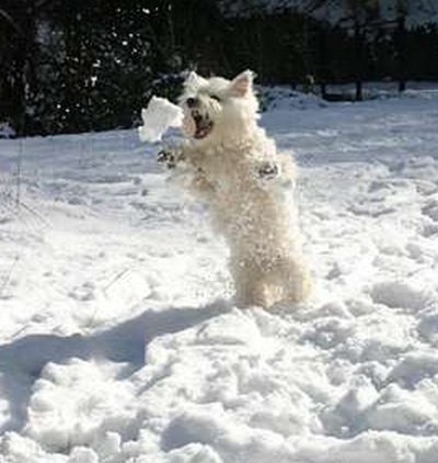 Top 10 Images of Dogs Playing in The Snow