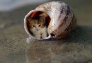 Top 10 Smallest Cats in The World