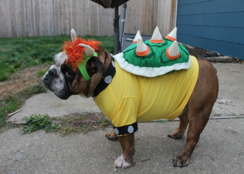 Image result for dogs dressed like chain chomp