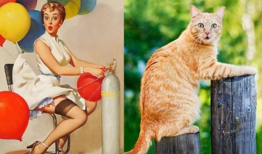 Top 10 Sexy Cats That Look Like 60s Pin-up Girls