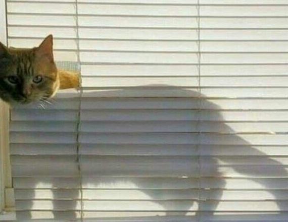 Killer Cat Funny