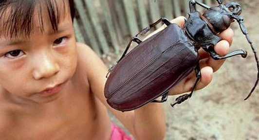 Top 10 Amazing and Unusual Beetles