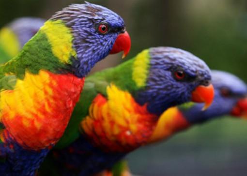 Top 10 Amazing Naturally Rainbow Coloured Animals