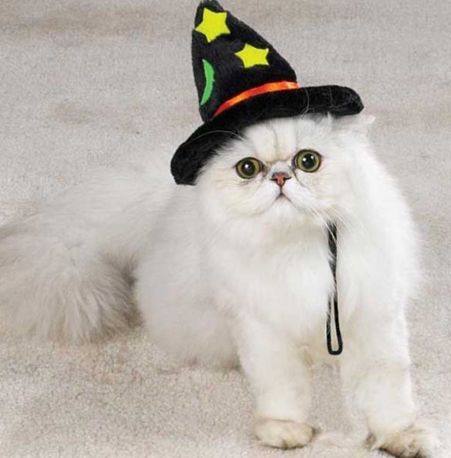 Top 10 Scary Cats in Witches Hats