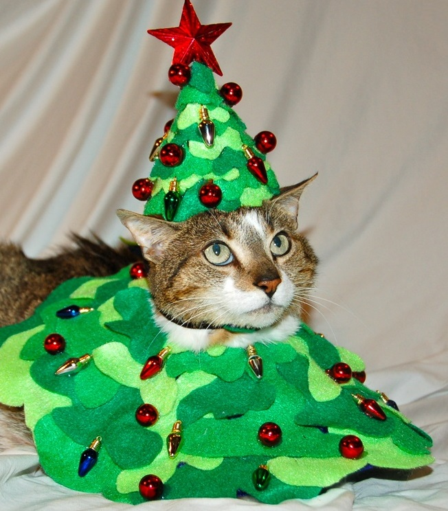 Top 10 festive costume christmas tree cats Christmas tree cat tower