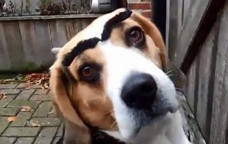 Top 10 Facially Expressive Dogs With Eyebrows