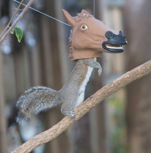 Top 10 Wonderful, Weird and Unusual Squirrel Feeders