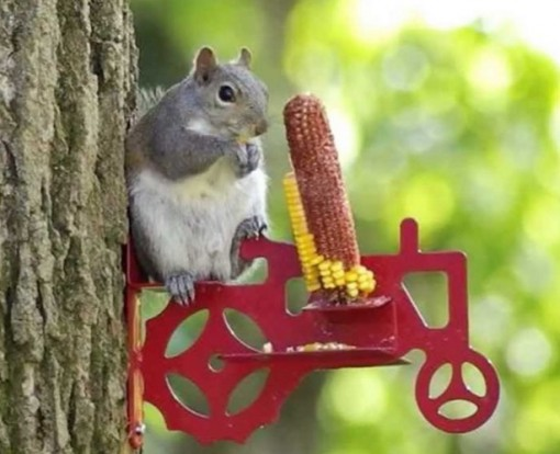 Tractor Squirrel Feeder
