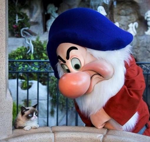 This Cat Loves Grumpy