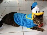 Top 10 Mouse Loving Walt Disney Fan Cats