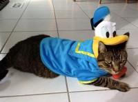 Top 10 Mouse Loving Walt Disney Fan Cats