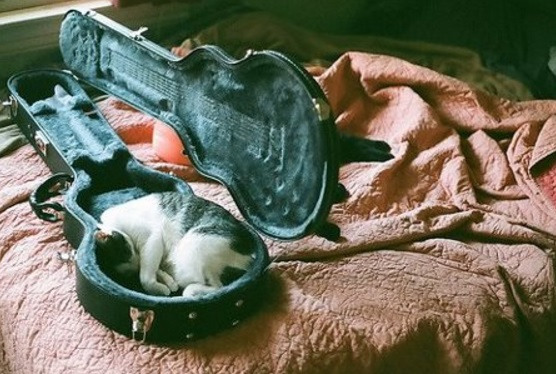 Top 10 sleepy cats sleeping in unusual places for Jackson galaxy band