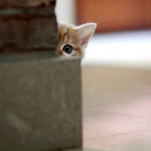 Top 10 Super Sneaky Super Spy Peeking Cats