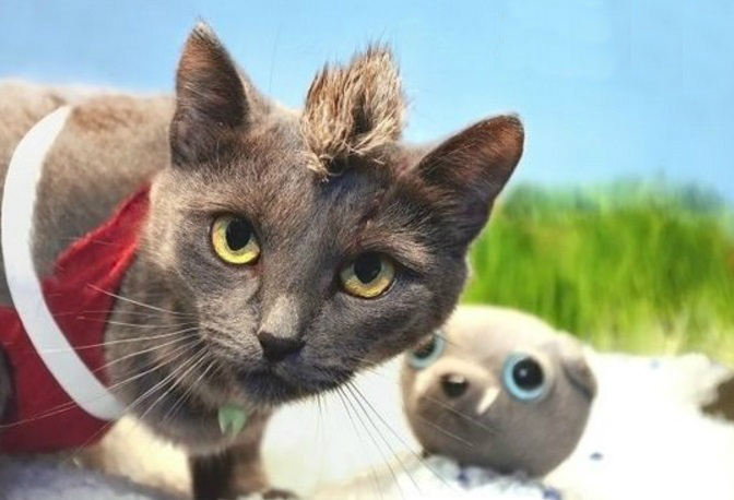 Top 10 Winning Costume Videogame Cosplay Cats