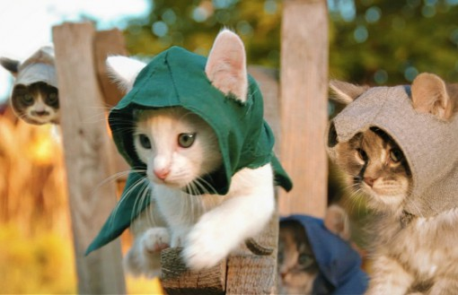 Assassin's Creed: Cat Cosplay