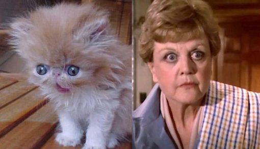 Jessica Fletcher Cat
