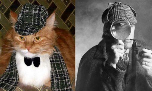 Sherlock Holmes Cat