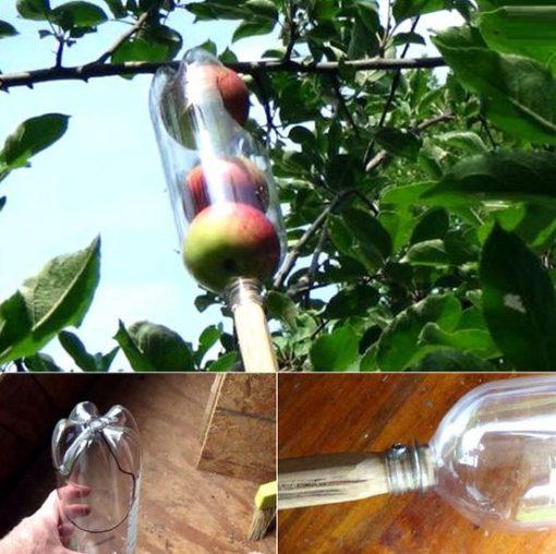 Empty Plastic Pop Bottle Transformed Into An Apple Picker