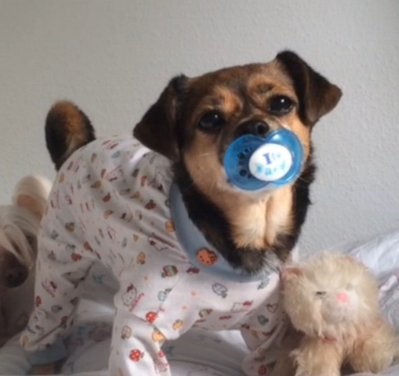 Top 10 Cute As A Button Dogs Who Want To Be Your Baby