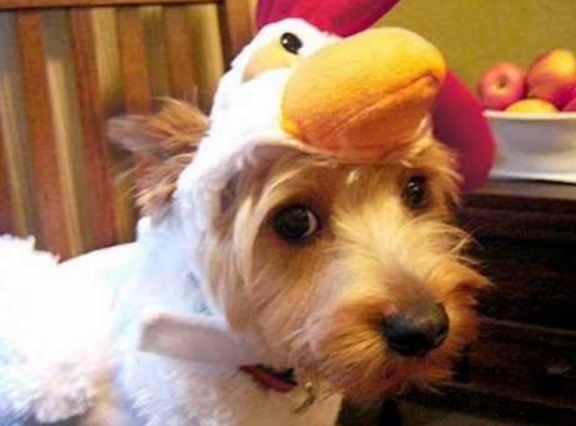 Top 10 Clucking Mad Dogs Dressed As Chickens