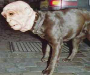 Top 10 Scariest Halloween Costumes for Dogs You Will Ever See