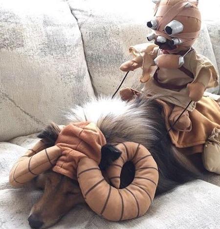 Dog Dressed as a Tusken Raider Bantha