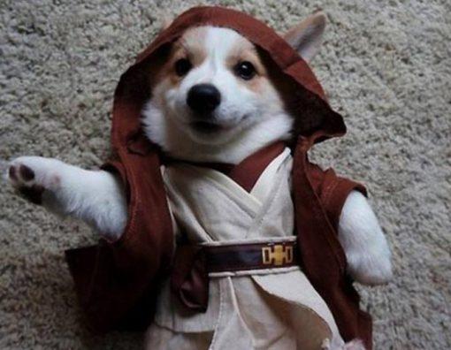 Dog Dressed as Obi-Wan Kenobi