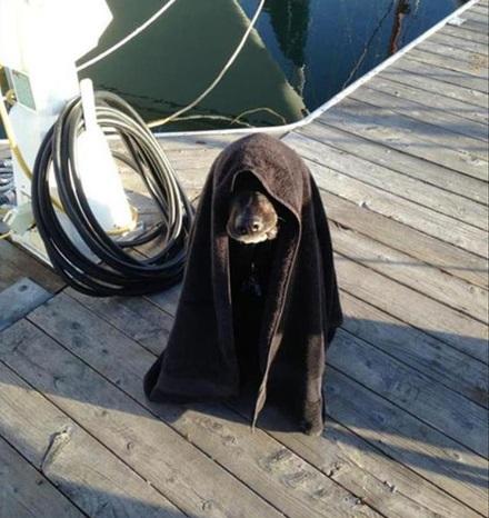 Dog Dressed as Darth Sidious