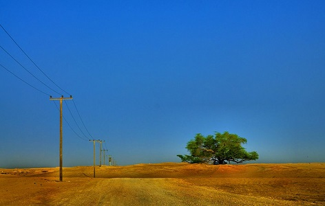 World's most resilient tree - Bahrain