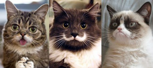 The Top 10 Most Famous Cats in the World