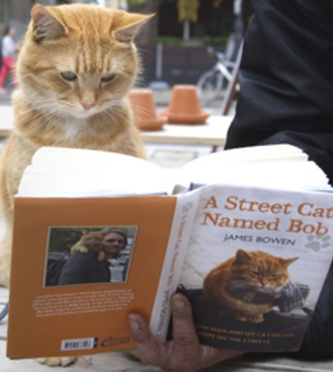 Streetcat Bob the Red Tabby cat