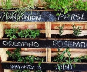 Top 10 Amazing Ways to Enjoy Using Pallets in the Garden