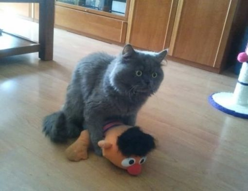 Cat With Muppet Toy