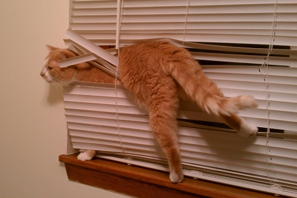 Top 10 Tangled Up Cats Who Hate Blinds
